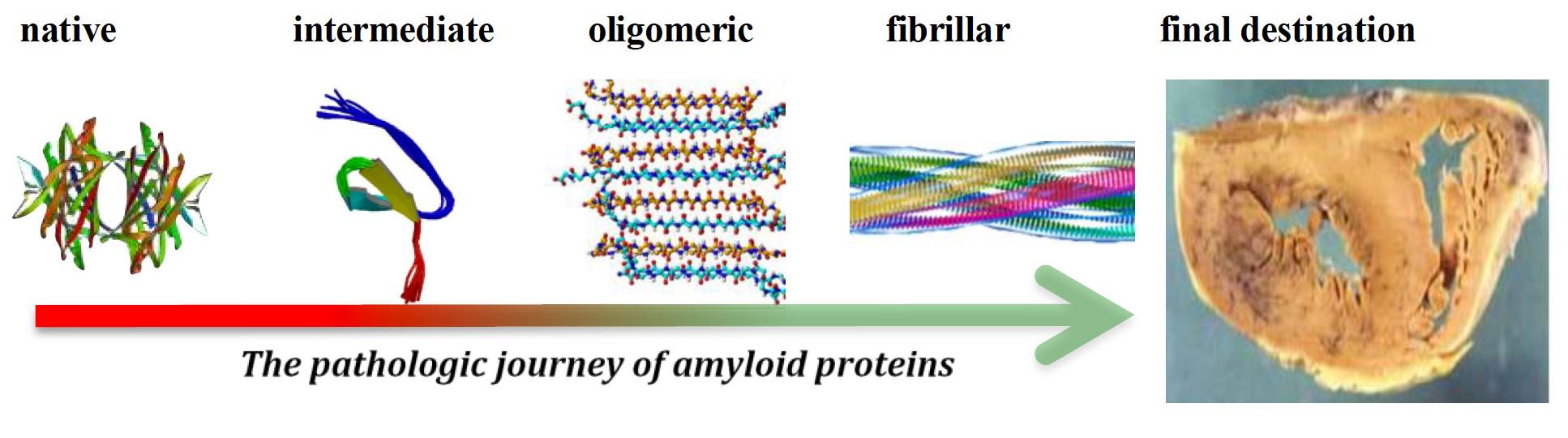 amyloid-journey